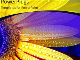 PowerPoint template displaying close-up of yellow daises with rain droplets on flower