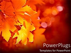 PowerPlugs: PowerPoint template with close-up yellow leaf during fall
