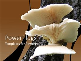 PowerPlugs: PowerPoint template with a Close Look of Mushroom