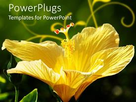 PowerPlugs: PowerPoint template with close up of beautiful yellow hibiscus flower on green background