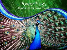 PowerPlugs: PowerPoint template with close up of blue peacock with wings spread out