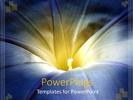 PowerPoint template displaying close up of blue and yellow Morning glory flower