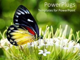 PowerPlugs: PowerPoint template with close up of butterfly sitting on small white flowers