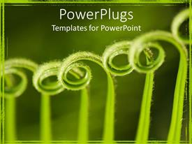 PowerPoint template displaying close up of curled green palm fronds