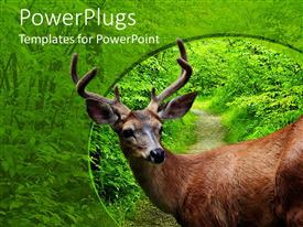 PowerPoint template displaying close up of deer head and body by a road in the green forest