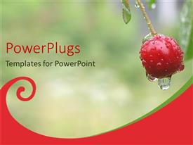 PowerPlugs: PowerPoint template with close up of dew dropping from cherry fruit on plant