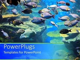 PowerPoint template displaying close up fish aquarium school of blue fish coral