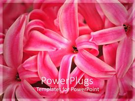 PowerPlugs: PowerPoint template with close up of flowers with blurred background