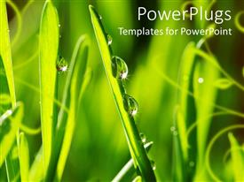 PowerPoint template displaying close up of green grass blade with visible dew drops