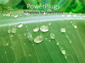 PowerPoint template displaying close up of green leaf covered in dew drops