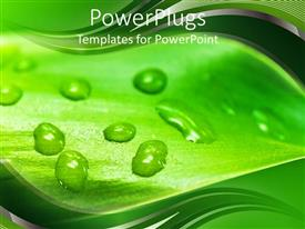 PowerPlugs: PowerPoint template with close up of green leaf with water droplets