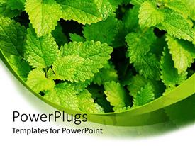 PowerPoint template displaying close up of green leaves, fresh green mint leaves in the garden