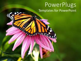PowerPlugs: PowerPoint template with close up of Monarch butterfly on coneflower in green background