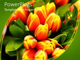 PowerPlugs: PowerPoint template with close up of orange and yellow tulips with green leaves