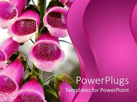 PowerPlugs: PowerPoint template with close up of pink flower bells with blurred background and pink waving background