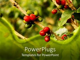PowerPlugs: PowerPoint template with close up of plants nature berries green background