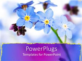 PowerPlugs: PowerPoint template with close up of purple forget me not flowers, purple streak border