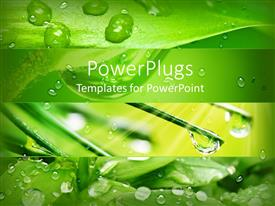PowerPlugs: PowerPoint template with close up of rain drops on green leaves and pine needles with sun rays on fresh green background