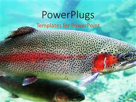 PowerPlugs: PowerPoint template with close up of Rainbow Trout swimming under the ocean