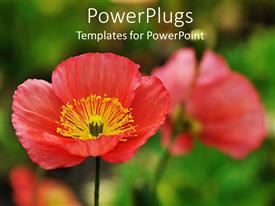 PowerPlugs: PowerPoint template with close up of red poppies, green background