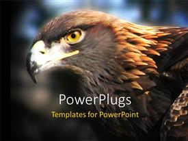 PowerPlugs: PowerPoint template with close up shot of a golden eagle on a blurry background