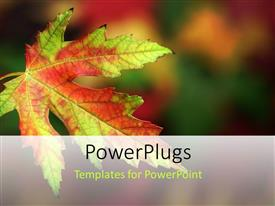 PowerPlugs: PowerPoint template with close up shot of a leave on a blurry background