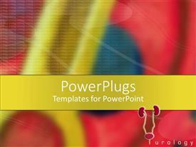 PowerPlugs: PowerPoint template with close up shot of a male urinary tract with an urology text