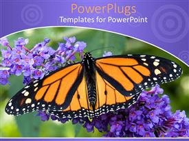 PowerPlugs: PowerPoint template with a close up shot on a Yellow and black butterfly