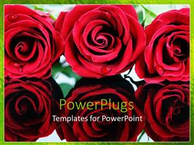 Amazing PPT theme consisting of close up of six red roses with droplets of dew, green border