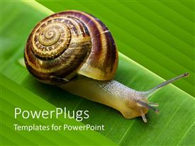 PowerPlugs: PowerPoint template with close up of snail going on a green leaf