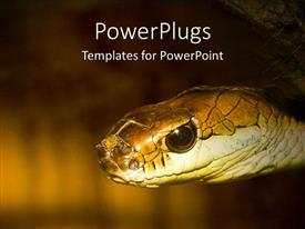 PowerPlugs: PowerPoint template with close up of snake's head and eye on brown and black background