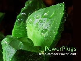 PowerPlugs: PowerPoint template with close up of succulent leaf with dew drops