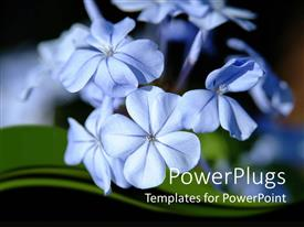 PowerPlugs: PowerPoint template with close up of tiny blue flowers in moonlight