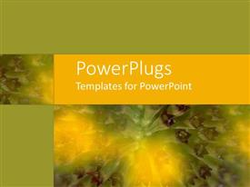 PowerPlugs: PowerPoint template with close up of tropical flower with purple,yellow and green colors, green and yellow background