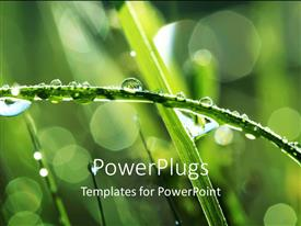 PowerPoint template displaying a close up view of a branch with droplets of water