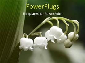 PowerPlugs: PowerPoint template with a close up view of a branch of a plant with five white flowers