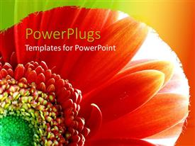 PowerPoint template displaying a close up view  of a bright red flower on an orange background
