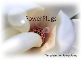 PowerPlugs: PowerPoint template with close up view of center of Magnolia flower showing white tubular strands