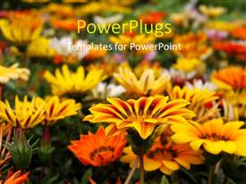 PowerPlugs: PowerPoint template with close up view fo lots of yellow and white colored flowers