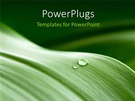 PowerPlugs: PowerPoint template with a close up view of a leaf with a drop of water on it