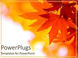 PowerPlugs: PowerPoint template with a close up view of some leaves of an autumn tree