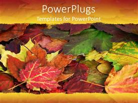 PowerPlugs: PowerPoint template with a close up view of lots of colourful leaves