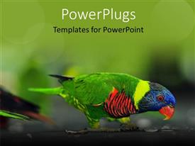PowerPoint template displaying a close up view of a multi colored bird on a tree branch
