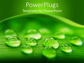 PowerPlugs: PowerPoint template with close up view of water droplets on a large leaf