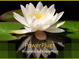 PowerPoint template displaying close up of Water-lily and its reflection on waterbody