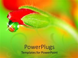 PowerPlugs: PowerPoint template with close up of water rain drop from a red rose bud on blurred background