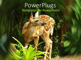 PowerPlugs: PowerPoint template with close up of white tailed deer fawn in the forest with swirled margins