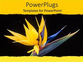 PowerPoint template displaying close up of yellow bird of paradise flower