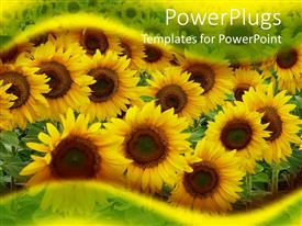 PowerPlugs: PowerPoint template with close up of yellow sunflowers on the field framed by transparent green and yellow waves