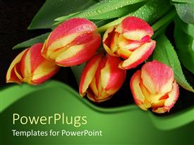 PowerPoint template displaying a close of view of a buch of yellow and red flowers with water drops